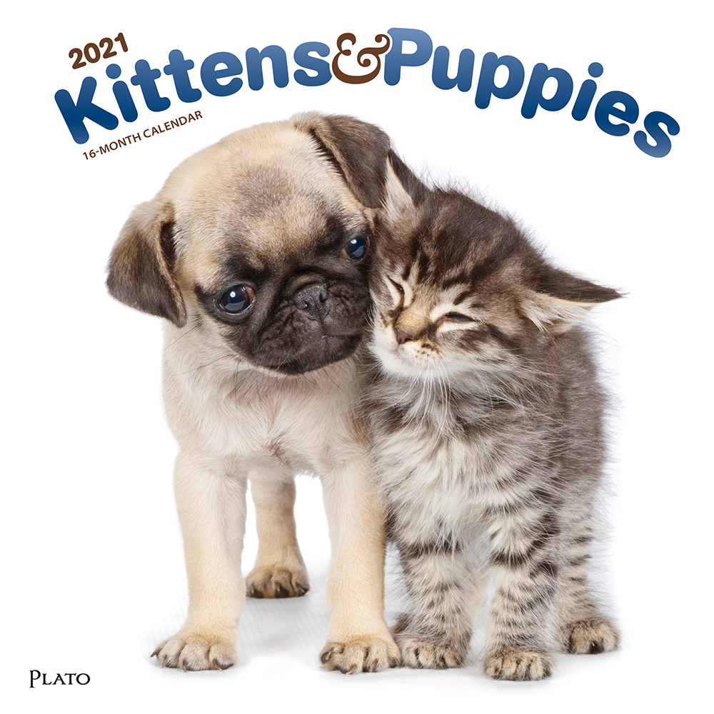 Kittens & Puppies 2021 12 x 12 Inch Monthly Square Wall Calendar with Foil Stamped Cover by Plato, Animals Cute Kittens