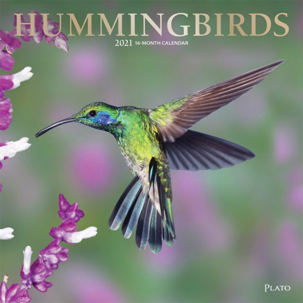 Hummingbirds 2021 12 x 12 Inch Monthly Square Wall Calendar with Foil Stamped Cover by Plato, Animals Wildlife Birds