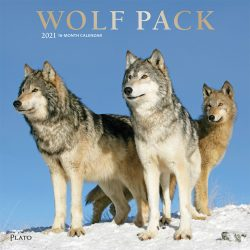 Wolf Pack 2021 12 x 12 Inch Monthly Square Wall Calendar with Foil Stamped Cover by Plato, Wildlife Animals