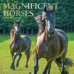 Magnificent Horses 2021 12 x 12 Inch Monthly Square Wall Calendar with Foil Stamped Cover by Plato, Animals Equestrian