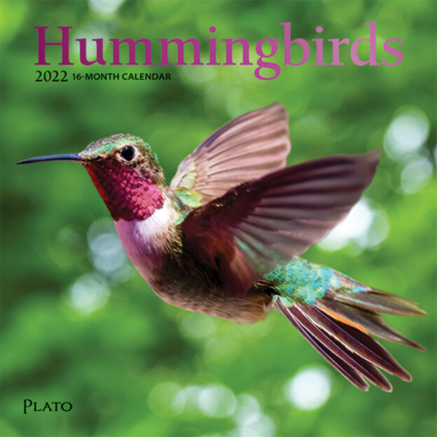 Hummingbirds 2022 7 x 7 Inch Monthly Mini Wall Calendar with Foil Stamped Cover by Plato, Animals Wildlife