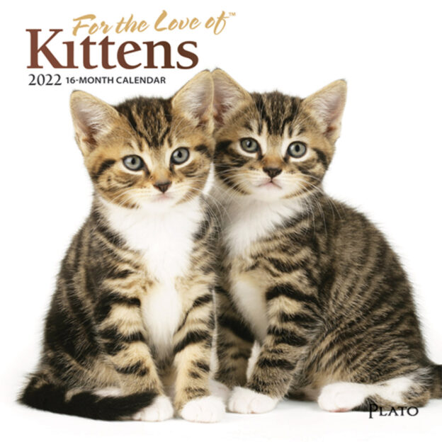 For the Love of Kittens 2022 7 x 7 Inch Monthly Mini Wall Calendar with Foil Stamped Cover by Plato, Animals Cats Feline