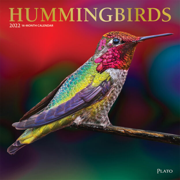 Hummingbirds 2022 12 x 12 Inch Monthly Square Wall Calendar with Foil Stamped Cover by Plato, Animals Wildlife