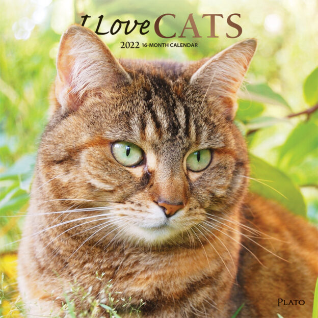 I Love Cats 2022 12 x 12 Inch Monthly Square Wall Calendar with Foil Stamped Cover by Plato, Feline Kittens Pelts