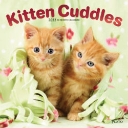 Kitten Cuddles 2022 12 x 12 Inch Monthly Square Wall Calendar with Foil Stamped Cover by Plato, Animals Cute Cat Feline
