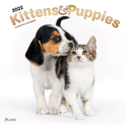Kittens & Puppies 2022 12 x 12 Inch Monthly Square Wall Calendar with Foil Stamped Cover by Plato, Animals Cute Kitten Pets