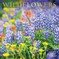 Wildflowers 2022 12 x 12 Inch Monthly Square Wall Calendar with Foil Stamped Cover by Plato, Outdoor Plant Floral