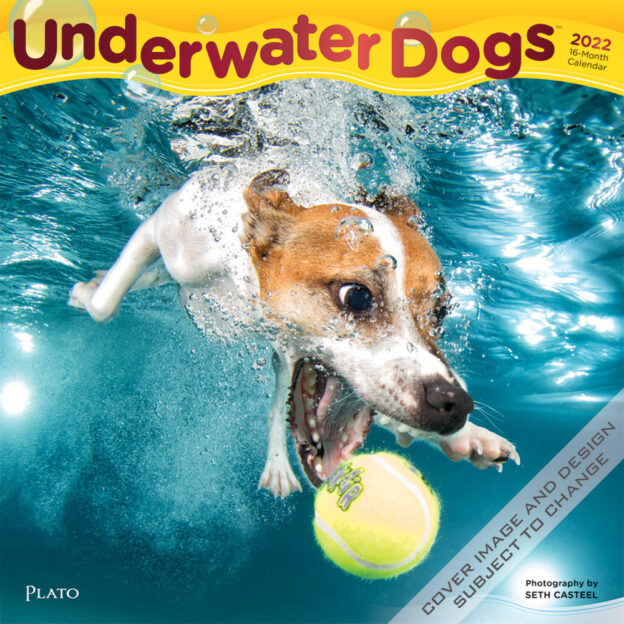 Underwater Dogs 2022 12 x 12 Inch Monthly Square Wall Calendar with Foil Stamped Cover by Plato, Pet Humor Puppy