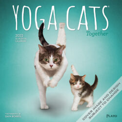 Yoga Cats Together OFFICIAL 2022 12 x 12 Inch Monthly Square Wall Calendar by Plato, Animals Humor Pets
