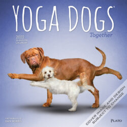 Yoga Dogs Together OFFICIAL 2022 12 x 12 Inch Monthly Square Wall Calendar by Plato, Animals Humor Pets