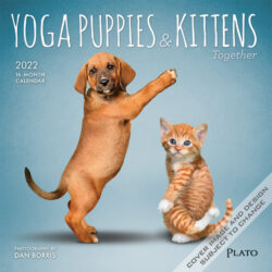 Yoga Puppies & Kittens Together OFFICIAL 2022 7 x 7 Inch Monthly Mini Wall Calendar with Foil Stamped Cover by Plato, Animals Dogs Cats Pets